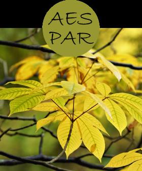AESPAR22p