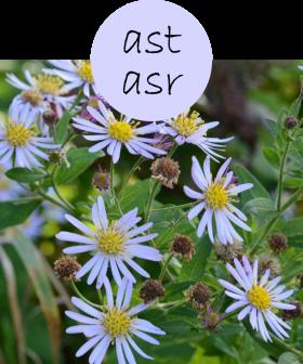 ASTASR222p