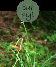 CARSYL202m