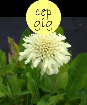 CEPGIG222p
