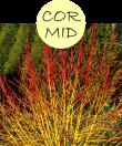 CORMID202m