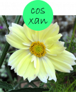 COSXAN222m
