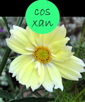 COSXAN222p