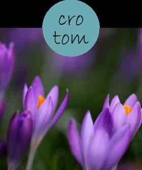 CROTOM0202p