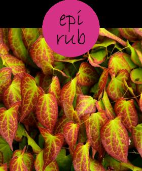 EPIRUB212p