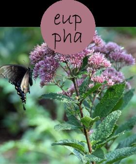 EUPPHA212p