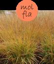 MOLFLA12m