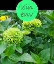 ZINENV12m