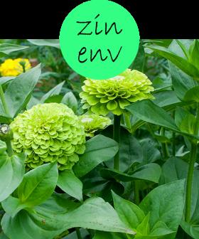 ZINENV12p