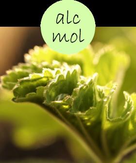 alcmol22p