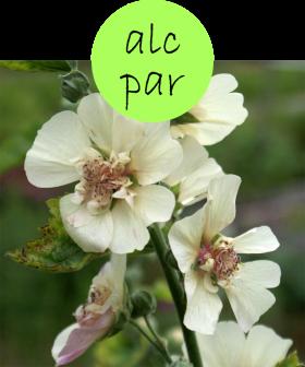 alcpar112p