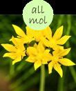 allmol102m