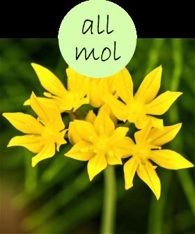 allmol102p