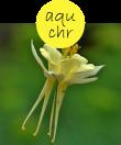 aquchr12m