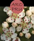 aropru32m