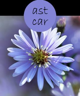 astcar32p