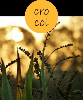 crocol22p