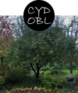 cydobl52m