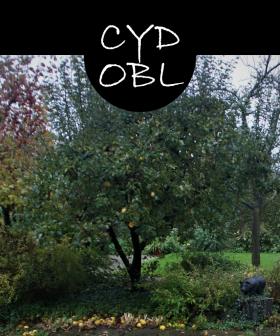 cydobl52p