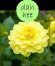 dahhee2m