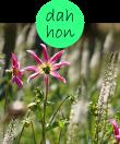dahhon32m