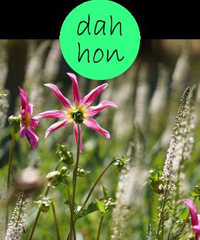 dahhon32p