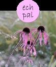 echpal62m