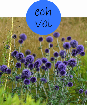 echvbl22p
