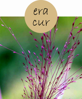 eracur112p