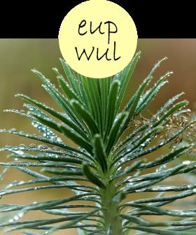 eupwul22p