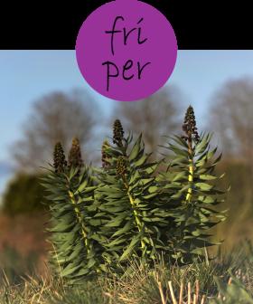 friper12p