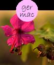 germac42m