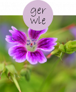 gerwle22m