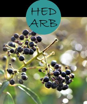 hedarb22p