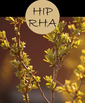 hiprha12p
