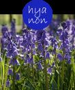 hyanon22m