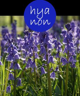 hyanon22p