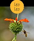 leoleo22m