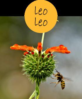 leoleo22p