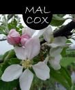 malcox22m