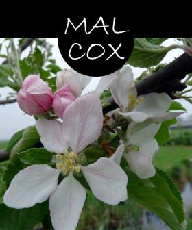 malcox22p