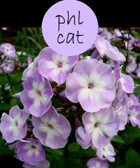 phlcat12p