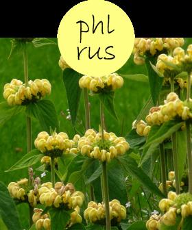phlrus22p