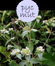pycmut52m