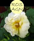 rosagn102m