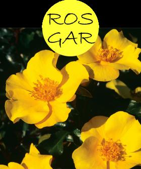 rosgar112p