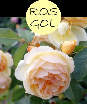 rosgol112p
