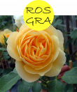 rosgra112m