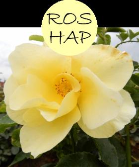 roshap42p