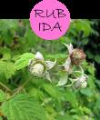 rubida122m